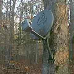 Satellite Dish mounted in the woods on a tree for a Cabin out in the woods.