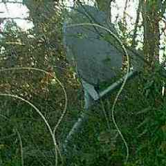Satellite Dish for a mobile home is mounted in trees out in the woods.